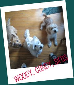 IMG_4703 woody, candy, siras
